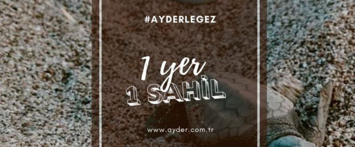 1 Yer 1 Sahil