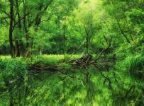 İğneada Longoz Ormanı