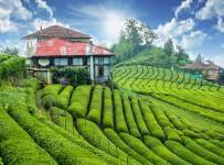 Çeçeva Çay Bahçesi