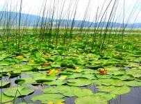 Efteni Kuş Gölü